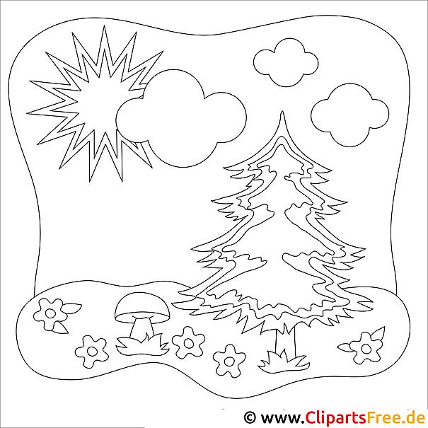 ausmalbild tannenbaum im wald