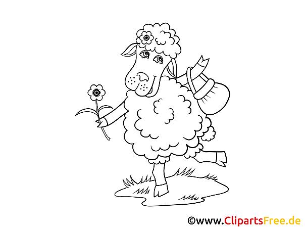 Kolorowanki do druku zwierzęta owca