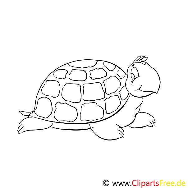 Schildkröte Ausmalbilder für Kinder gratis