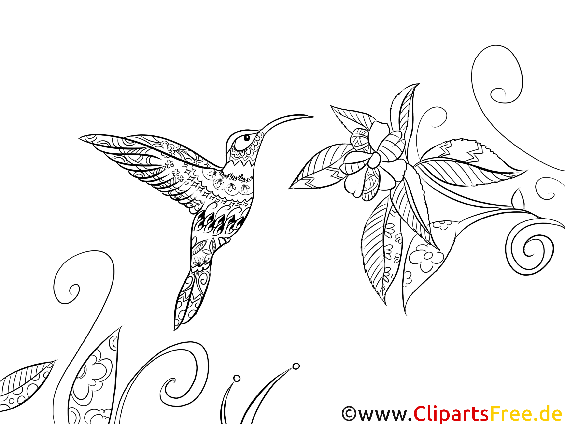 Ausmalbild Für Erwachsene Vogel Fauna