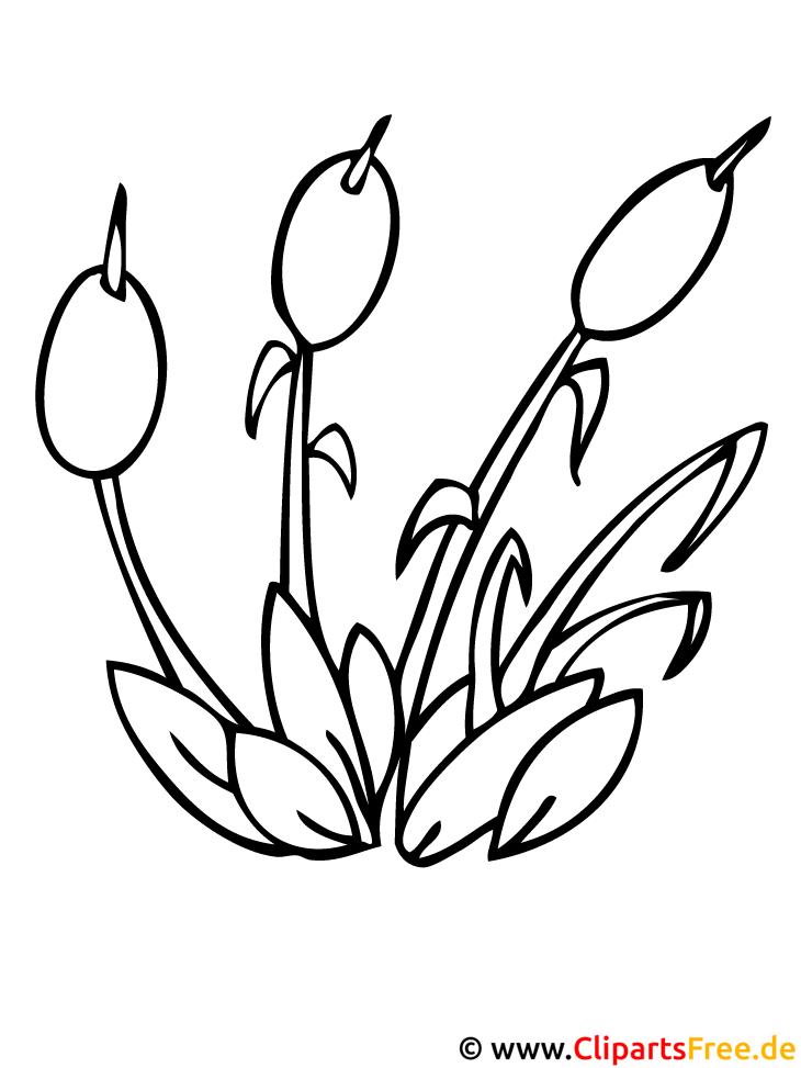 Pflanzen Malvorlagen Kostenlos Zum Ausdrucken
