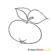 Mandarin Bild zum Ausmalen