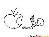 Kolorowanki Jabłko - Darmowe kolorowanki do wydruku