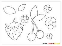 Ausmalbilder Beeren, Früchte, Blumen
