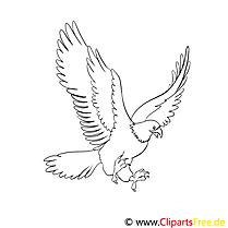 Adler Ausmalbilder für Kinder gratis