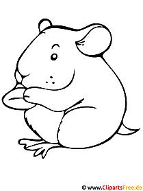 Hamster Malvorlage gratis